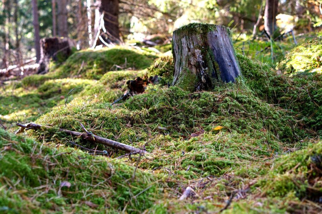 skogen-10