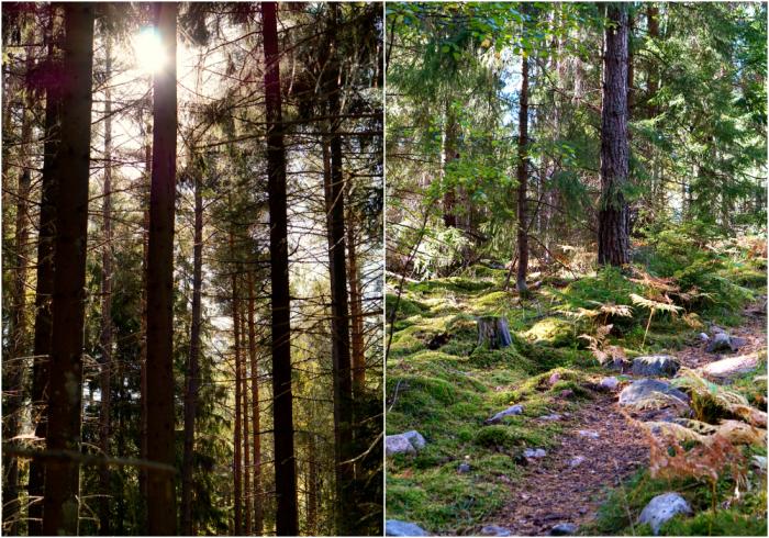 skogen-11