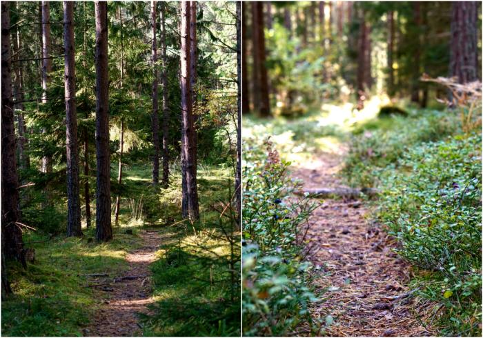 skogen-14