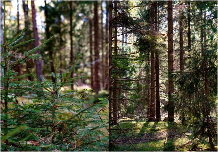 skogen-7