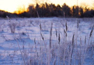 Magisk vintermorgon Trettondagsafton