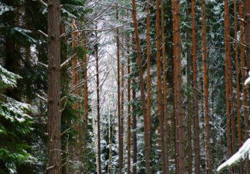 Skogsutflykt vinter med barn