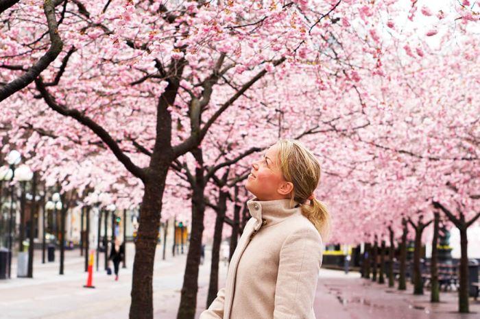 Karin under körsbarsträden i Kungsträdgården