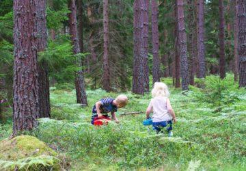 Barnen i blåbärsskogen