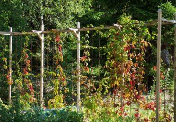 Trädgården i augusti