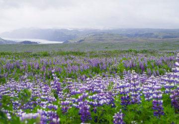 Glaciären Myrdalsjökull på Island