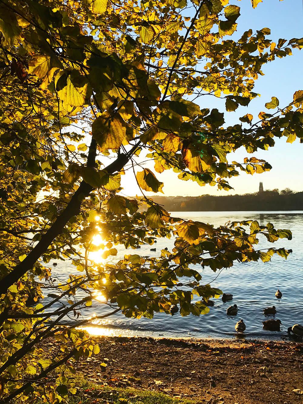 Soluppgång i november vid Norr Mälarstrand, Stockholm