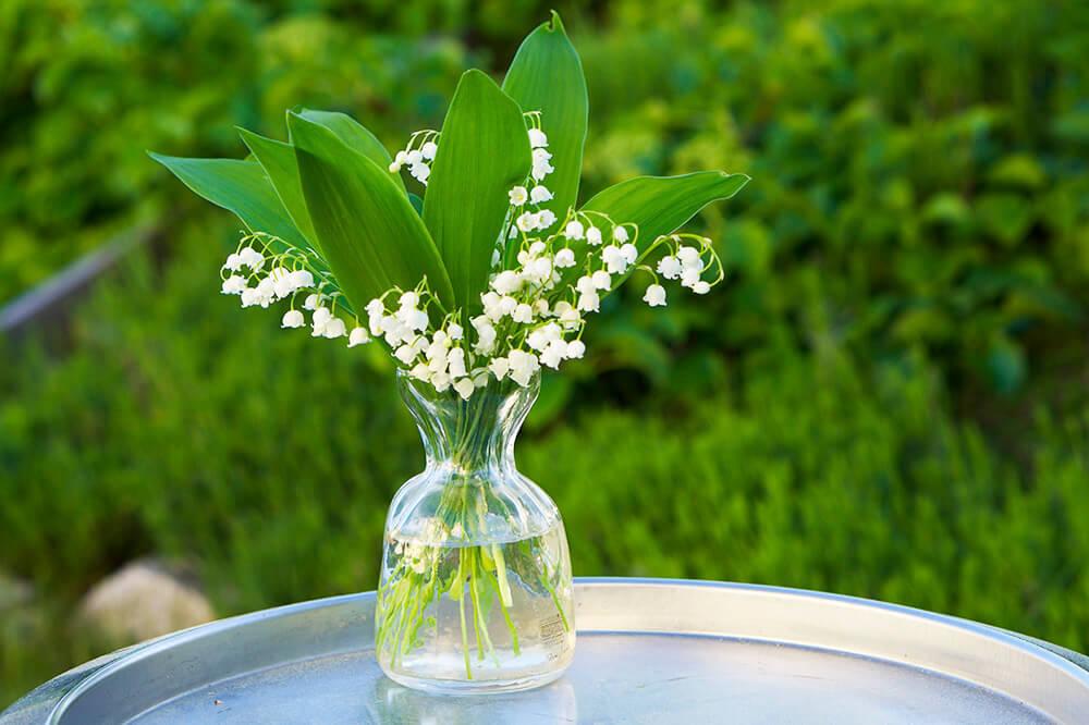 Liljekonvaljer på morsdag