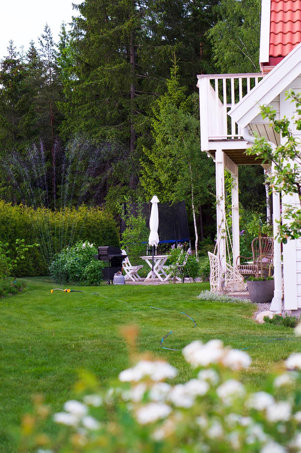 sommar i trädgården