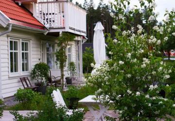 jasminebuske i trädgården