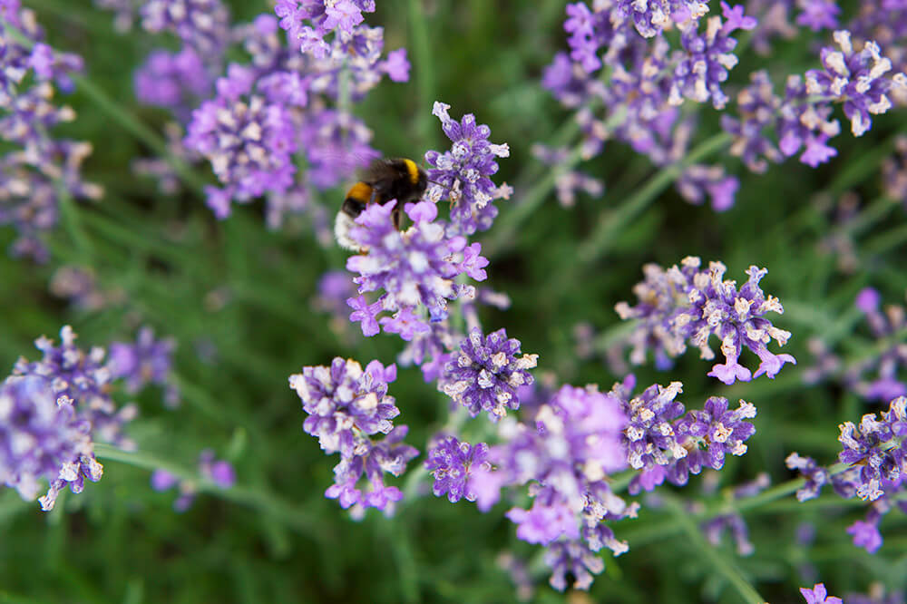 Trädgårdsarbete som terapi
