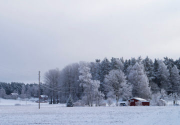 Vinterdag i skogen