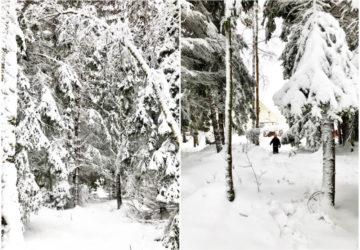 Vinter med en massa snö