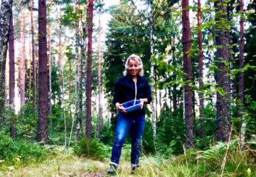 Blåbärsplock i skogen