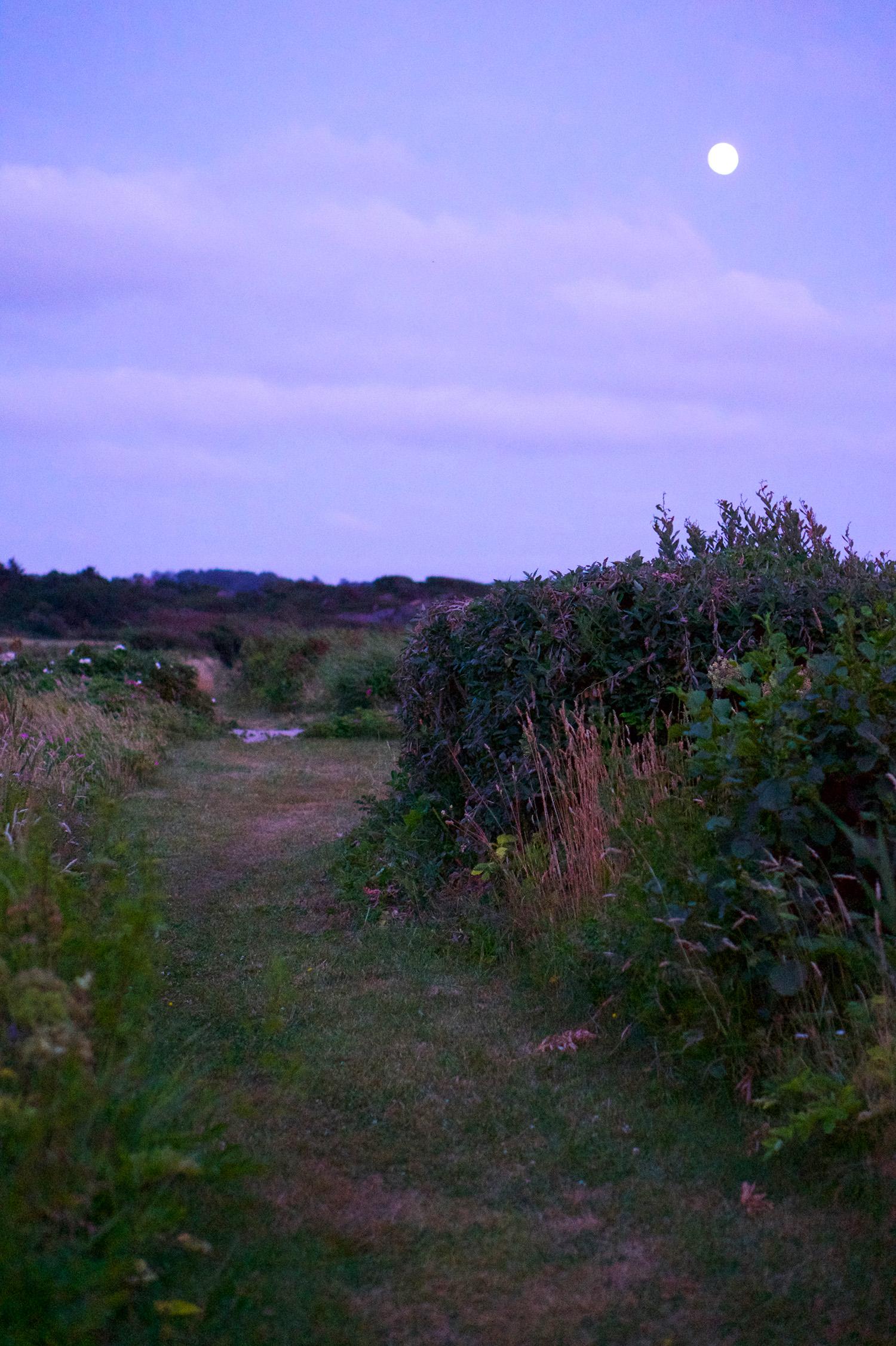 Kvällspromenad vid havet i Ugglarp