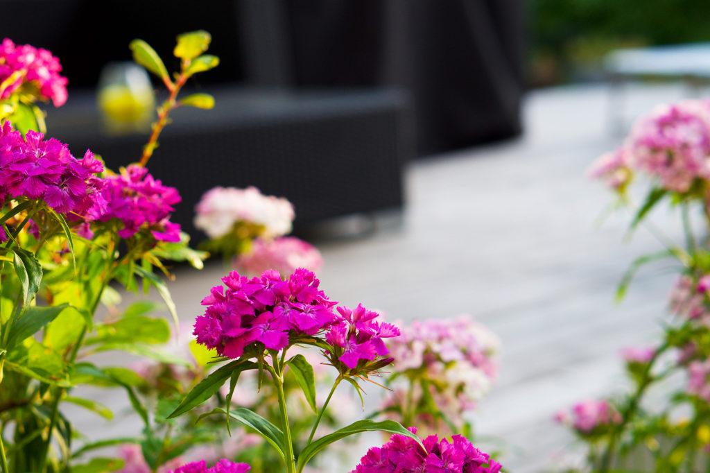 När sommaren var som vackrast - hemma i vår trädgård i juli