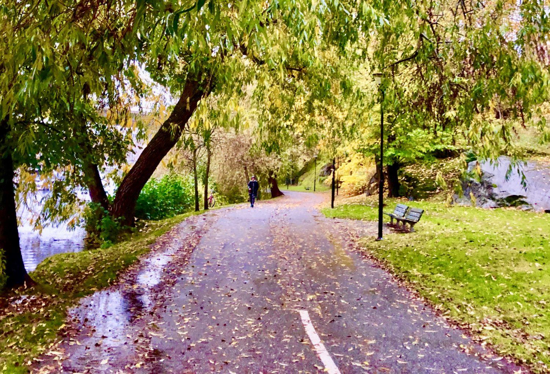 Löpning en regnig höstmorgon