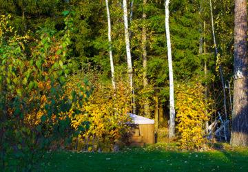 En oktoberdag i trädgården