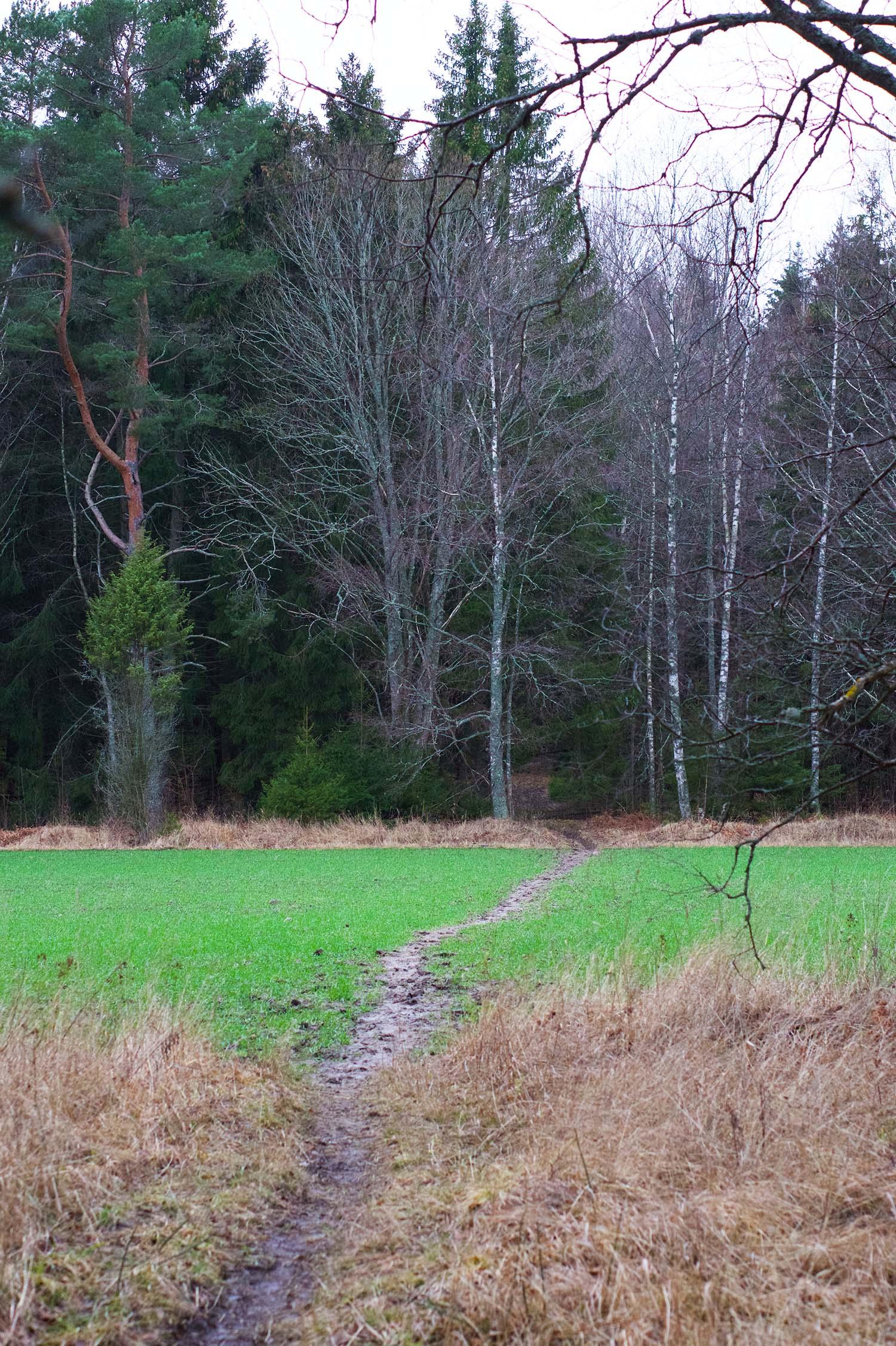 Skogen - min plats för reflektion