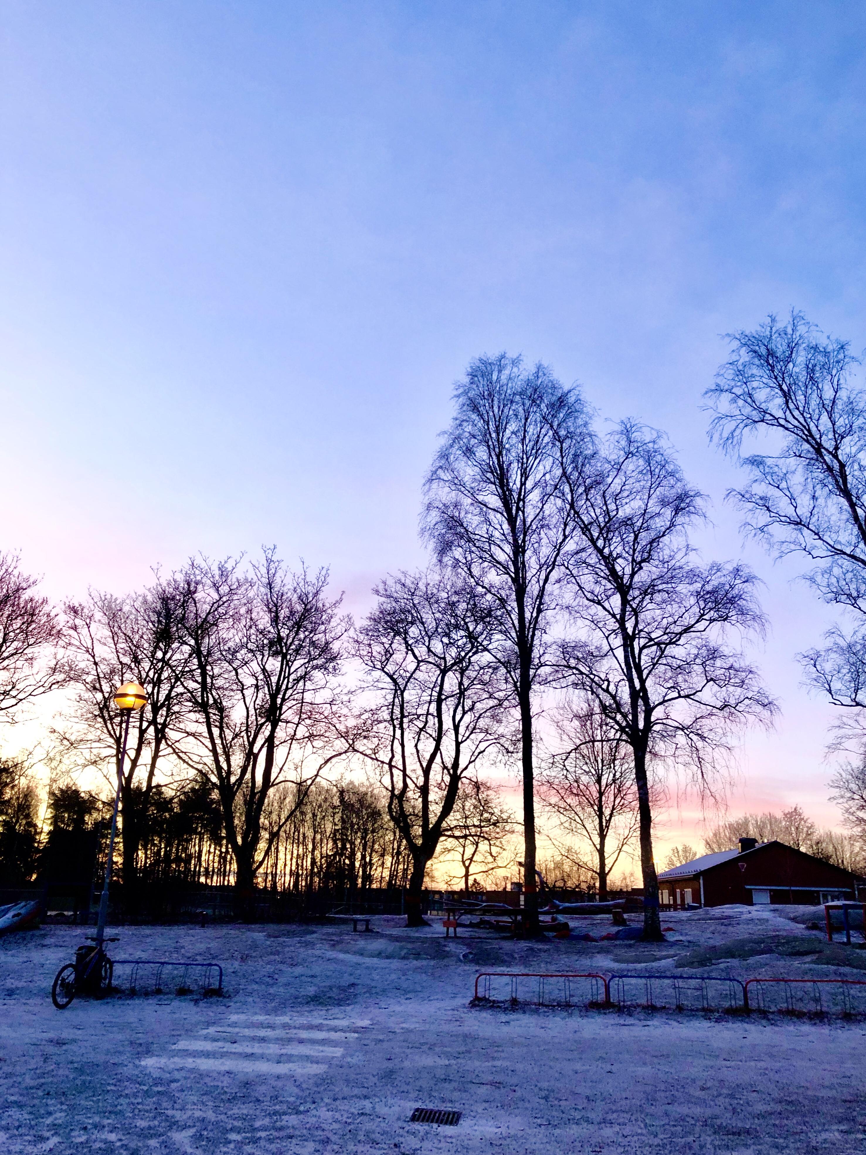 Rosa morgonhimmel i februari