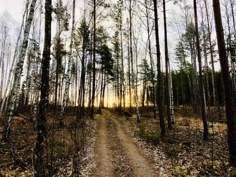 Stresshantering i kris - min medicin i form av löpning i skogen