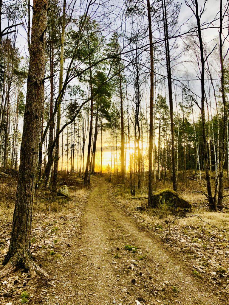 Morgonpromenad i skog