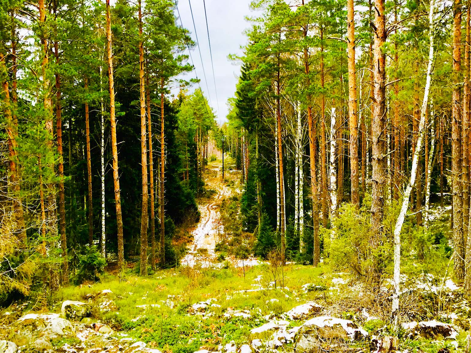 Skogen - reflektion och egentid