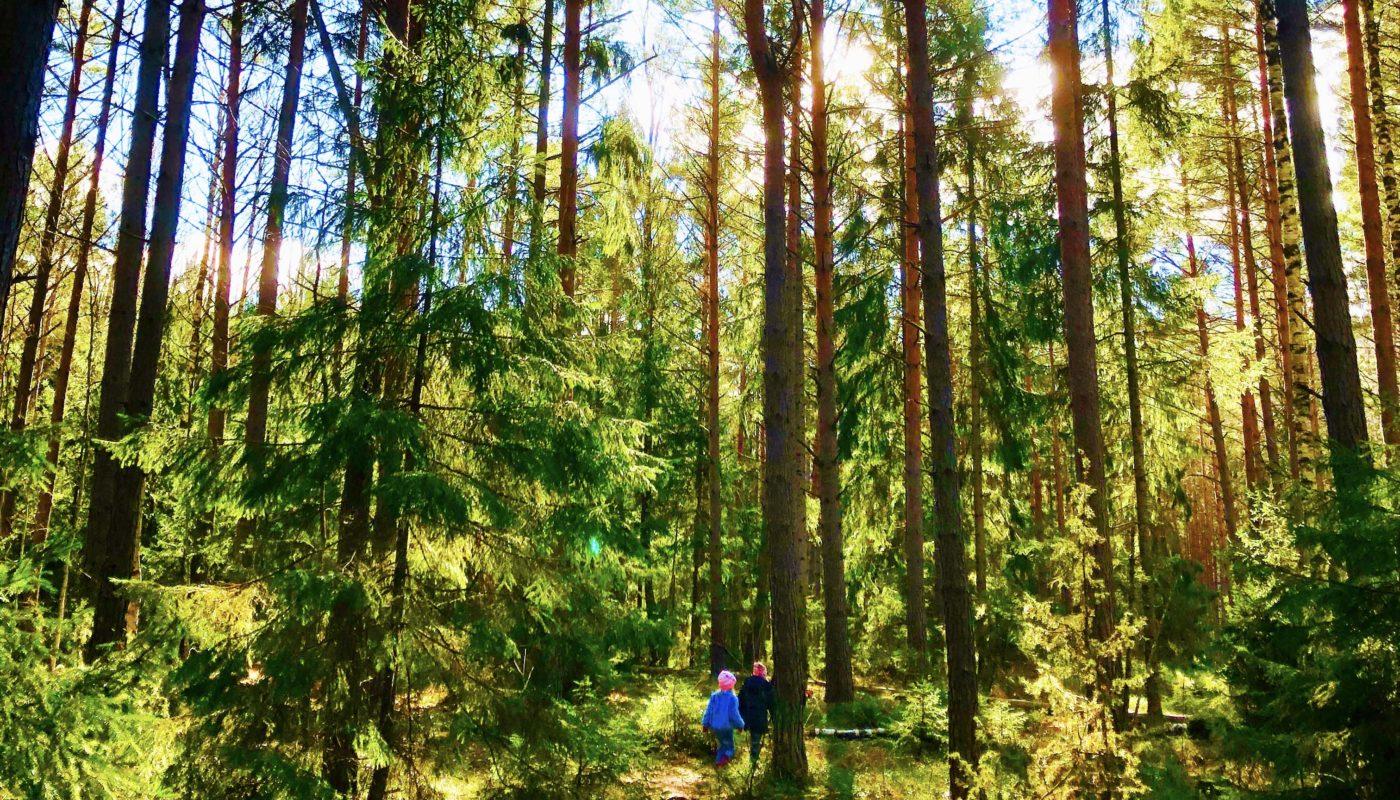 Skogsutflykt med barn