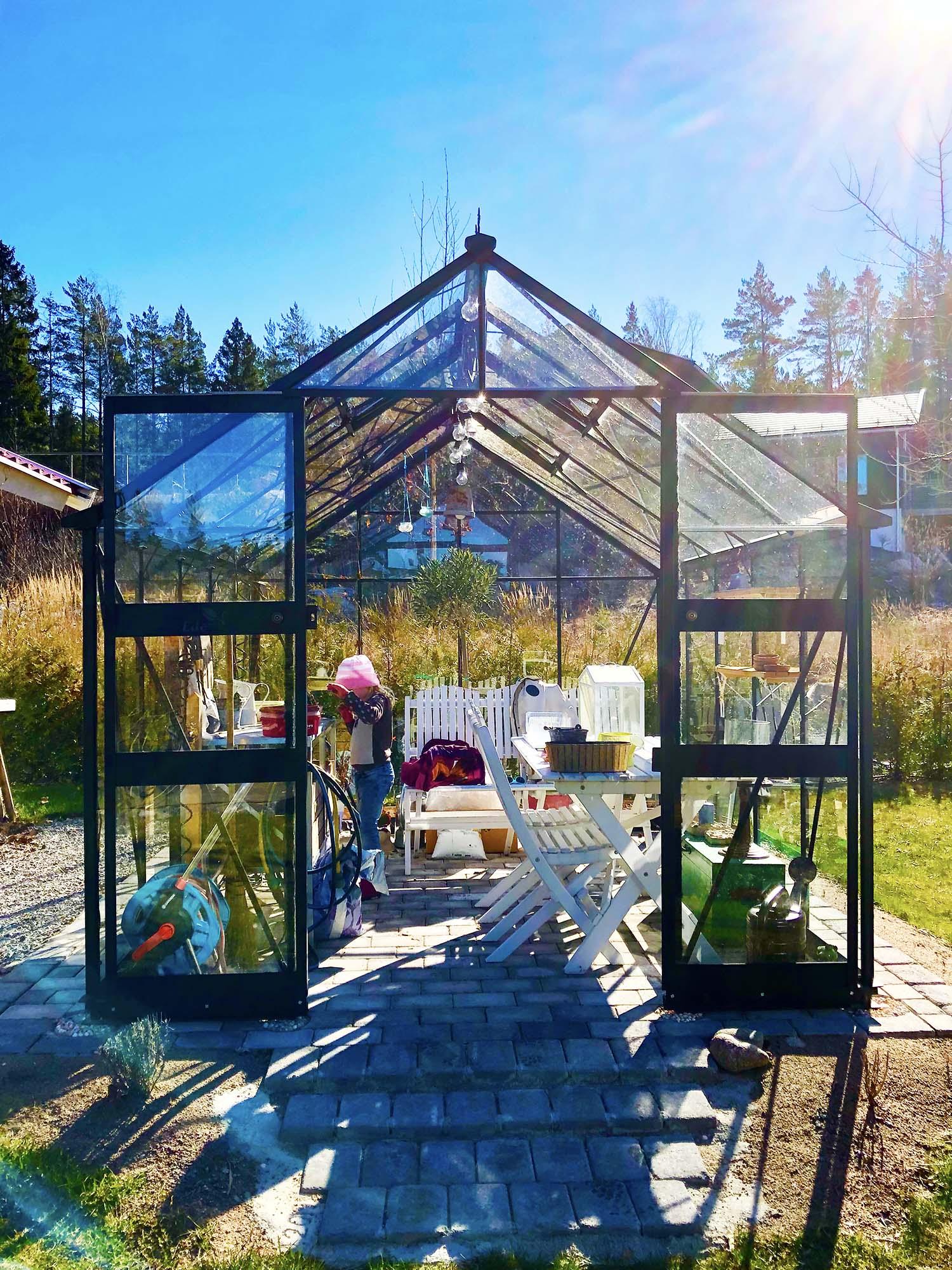 förodla tomatplantor i växthus