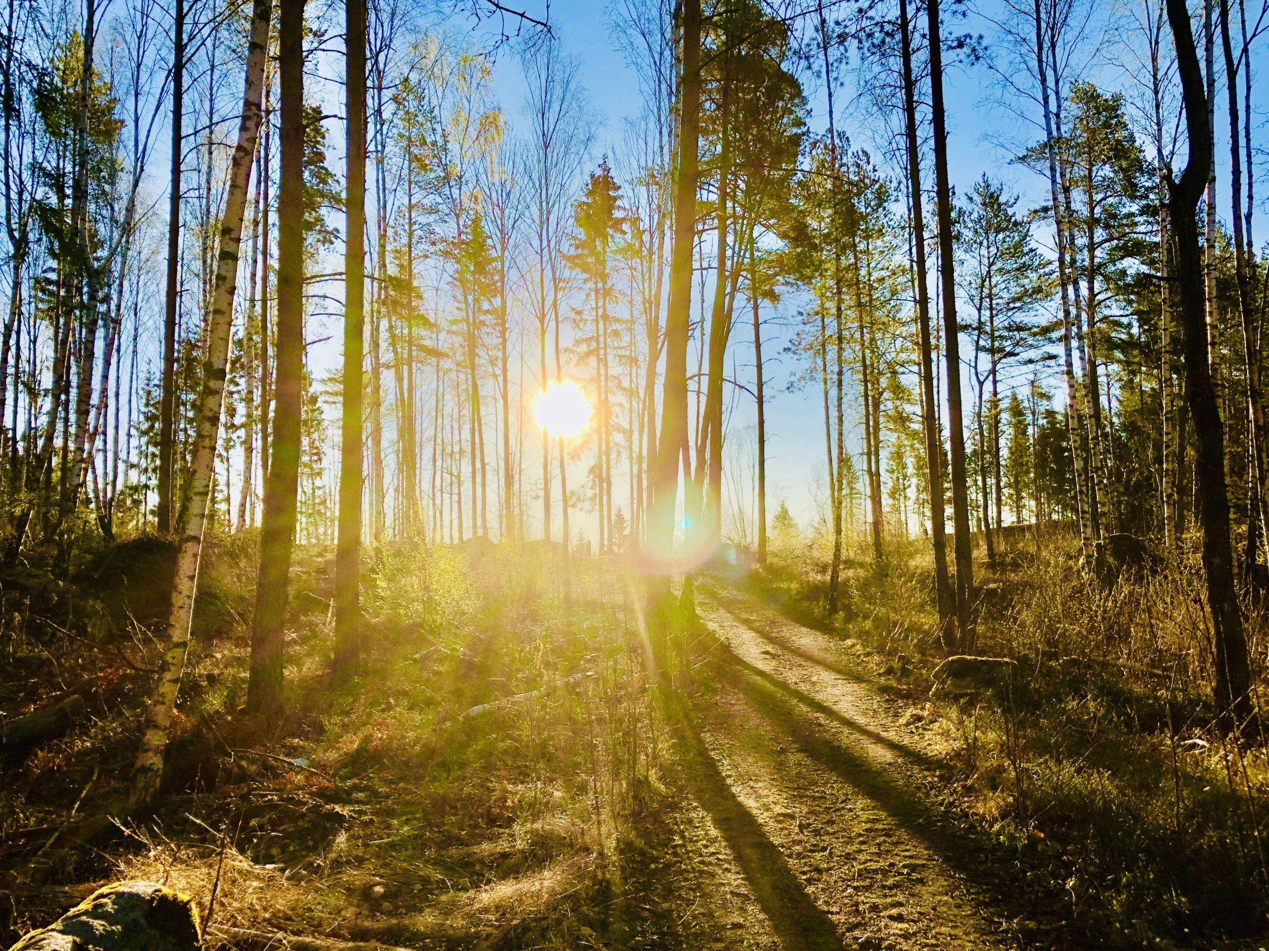 Morgonpromenad i skogen
