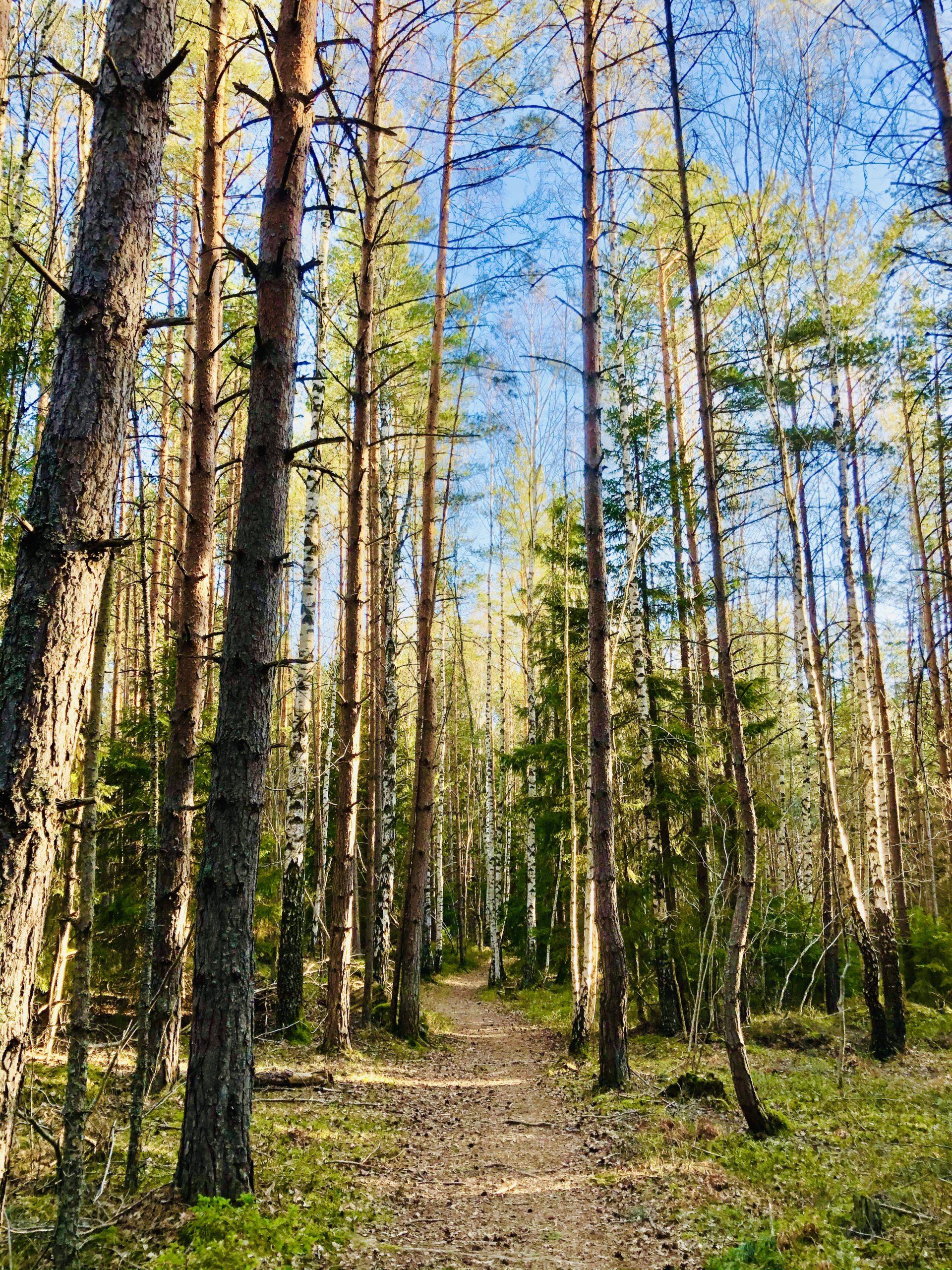 Vår skog