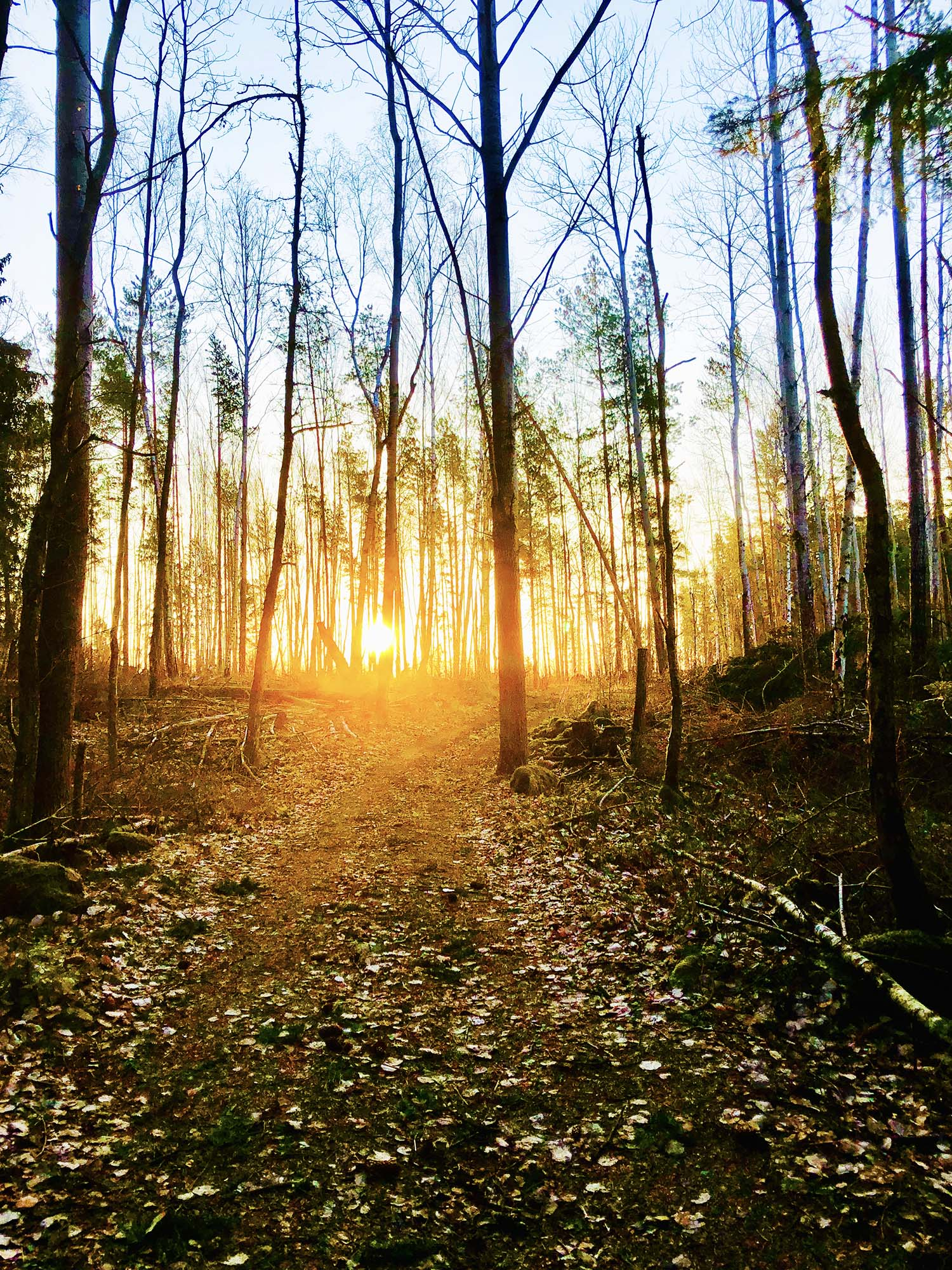 Rutiner att hålla fast vid - promenad i skogen i morgonsol