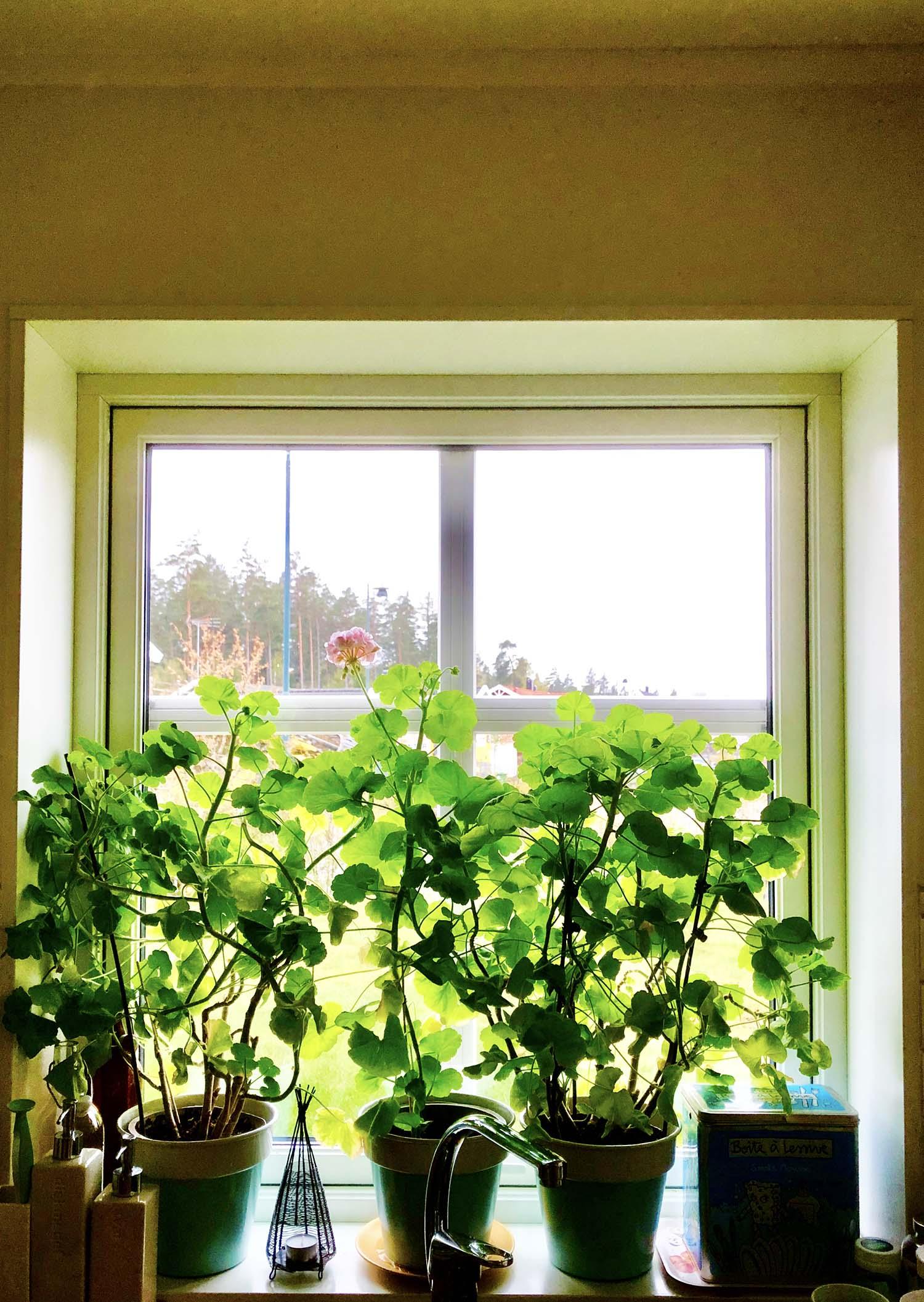 Utsikt från vårt kök