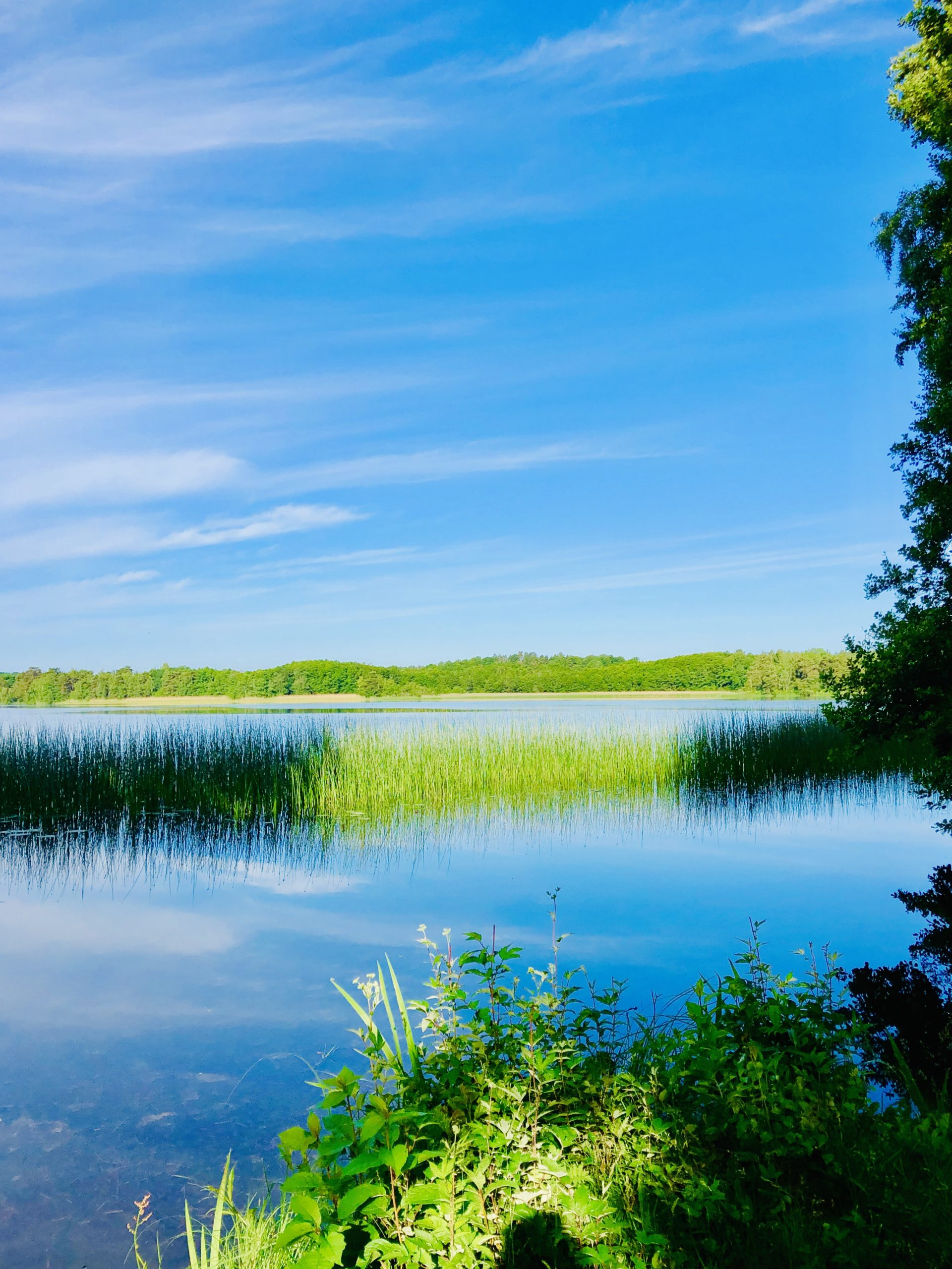 Vacker morgon vid sjön