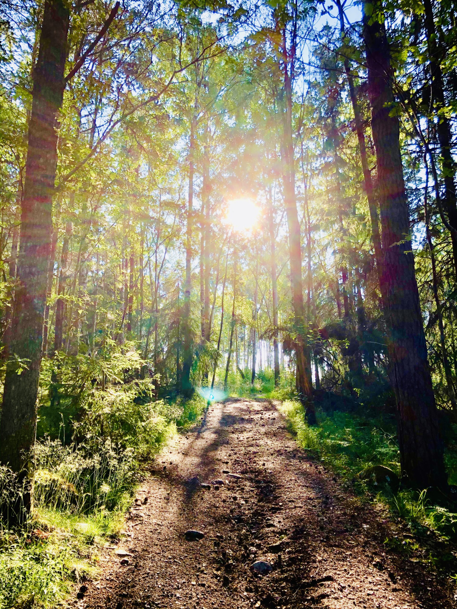 Skogen på morgonen