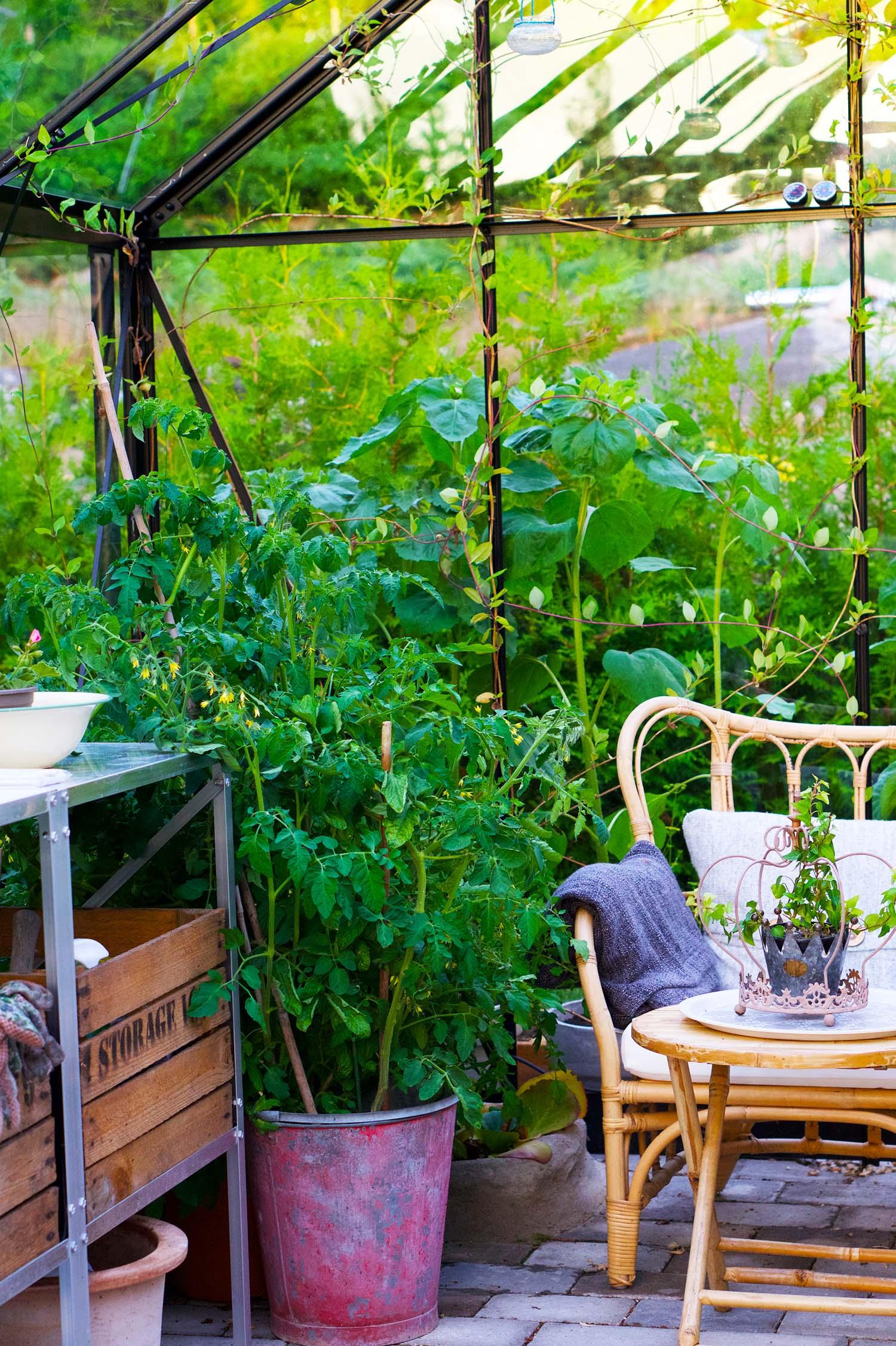 En semesterdag hemma - växthuset