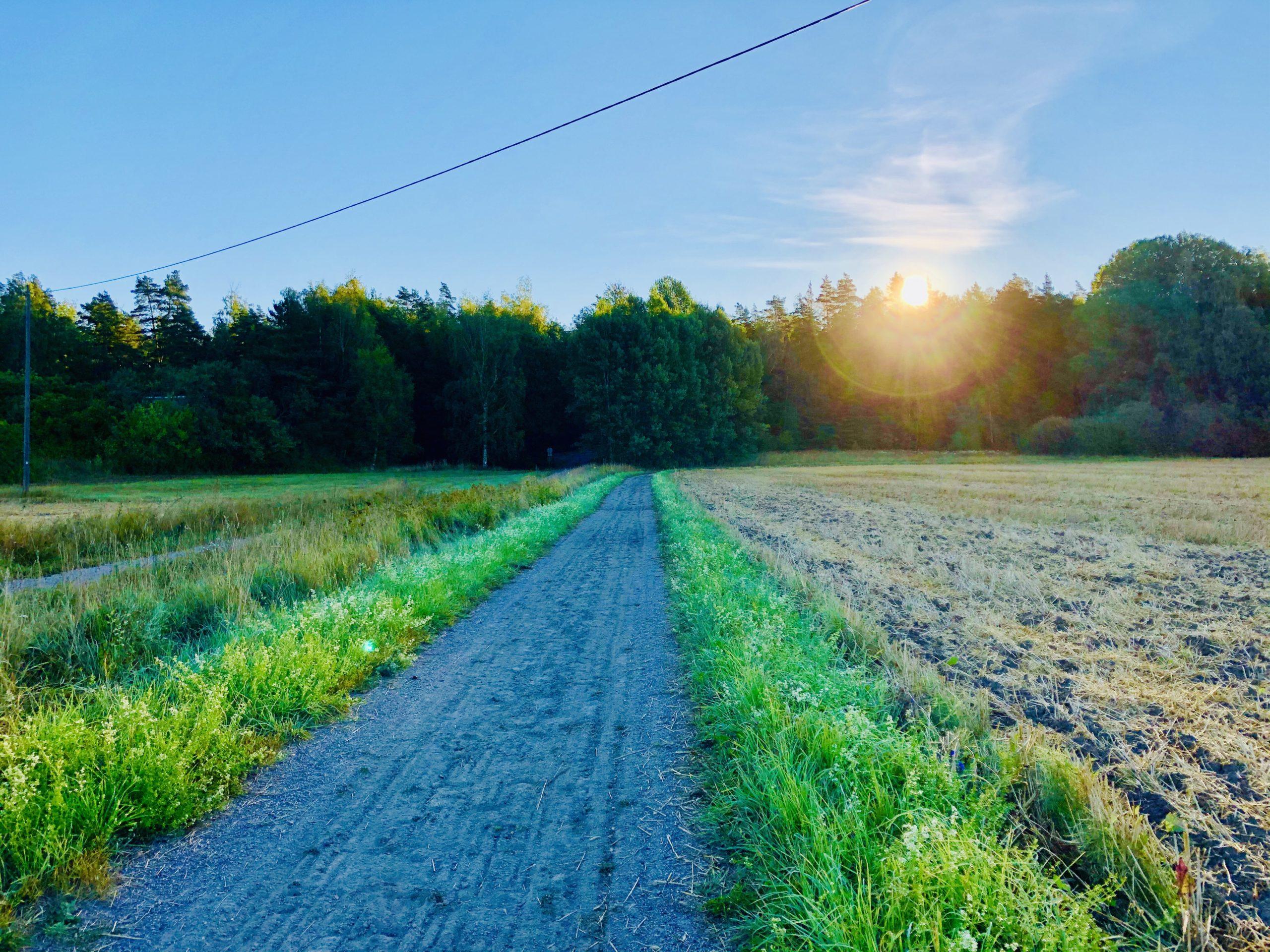 Morgonpromenad i augusti