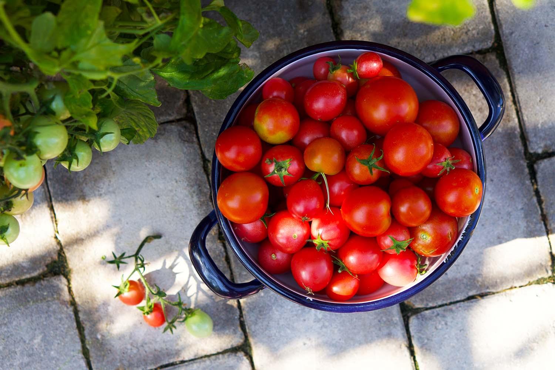 Soltorkade tomater recept