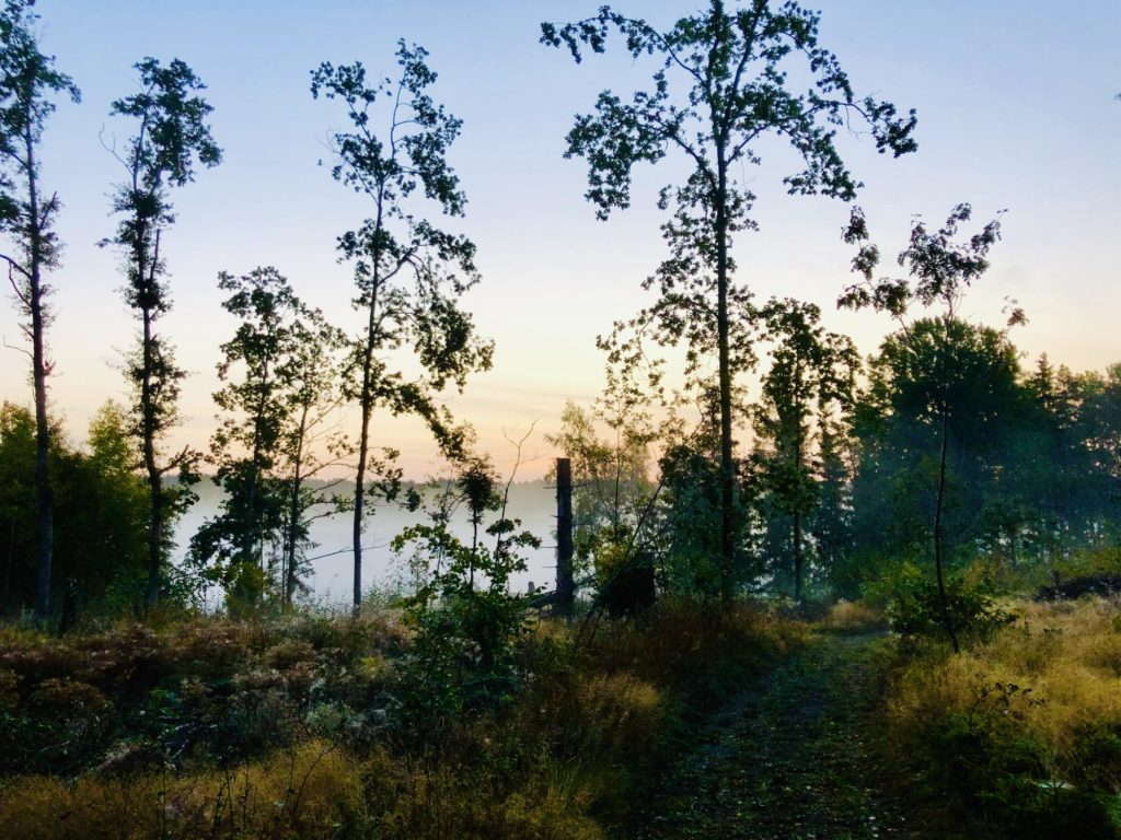 Meditativ löpning i skogen