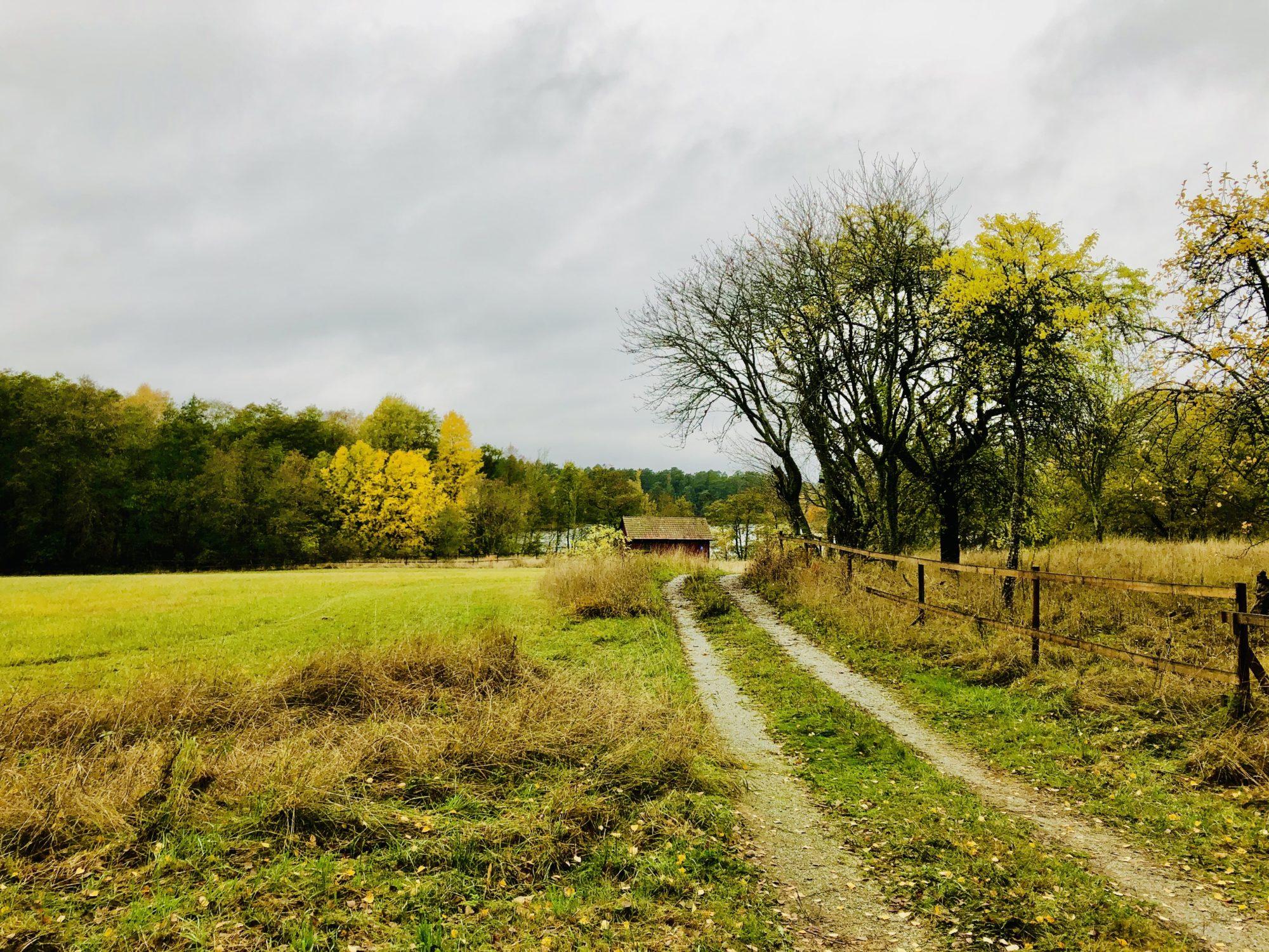 Utomhusliv på hösten