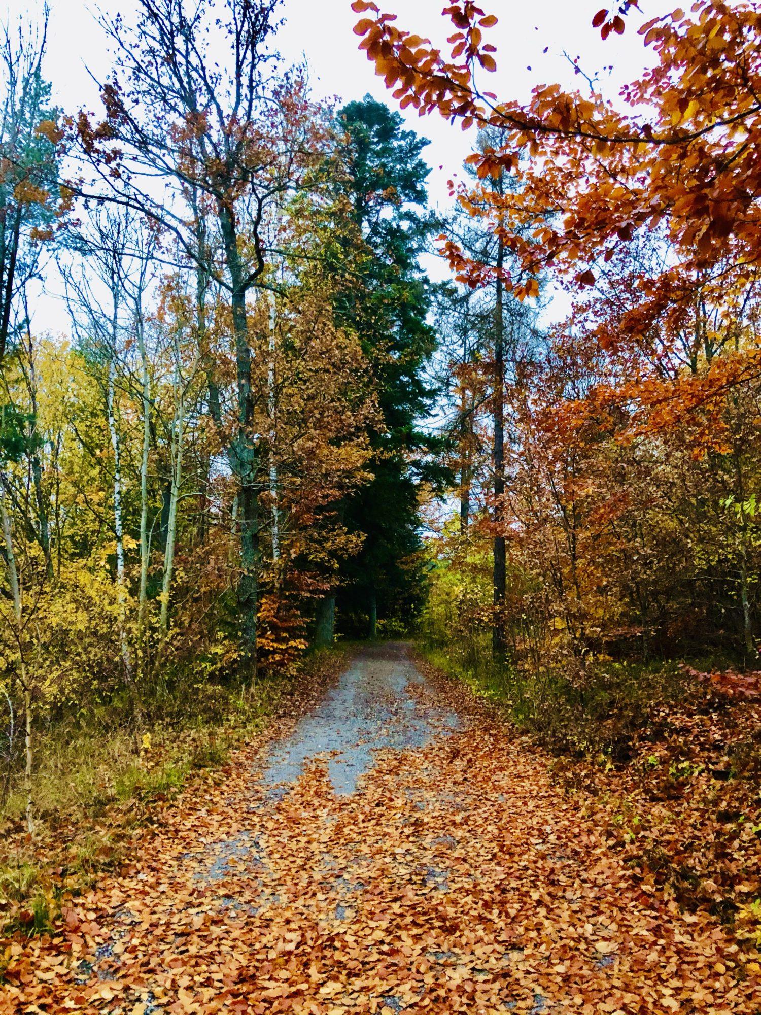 Vacker promenad på hösten - 1:a november