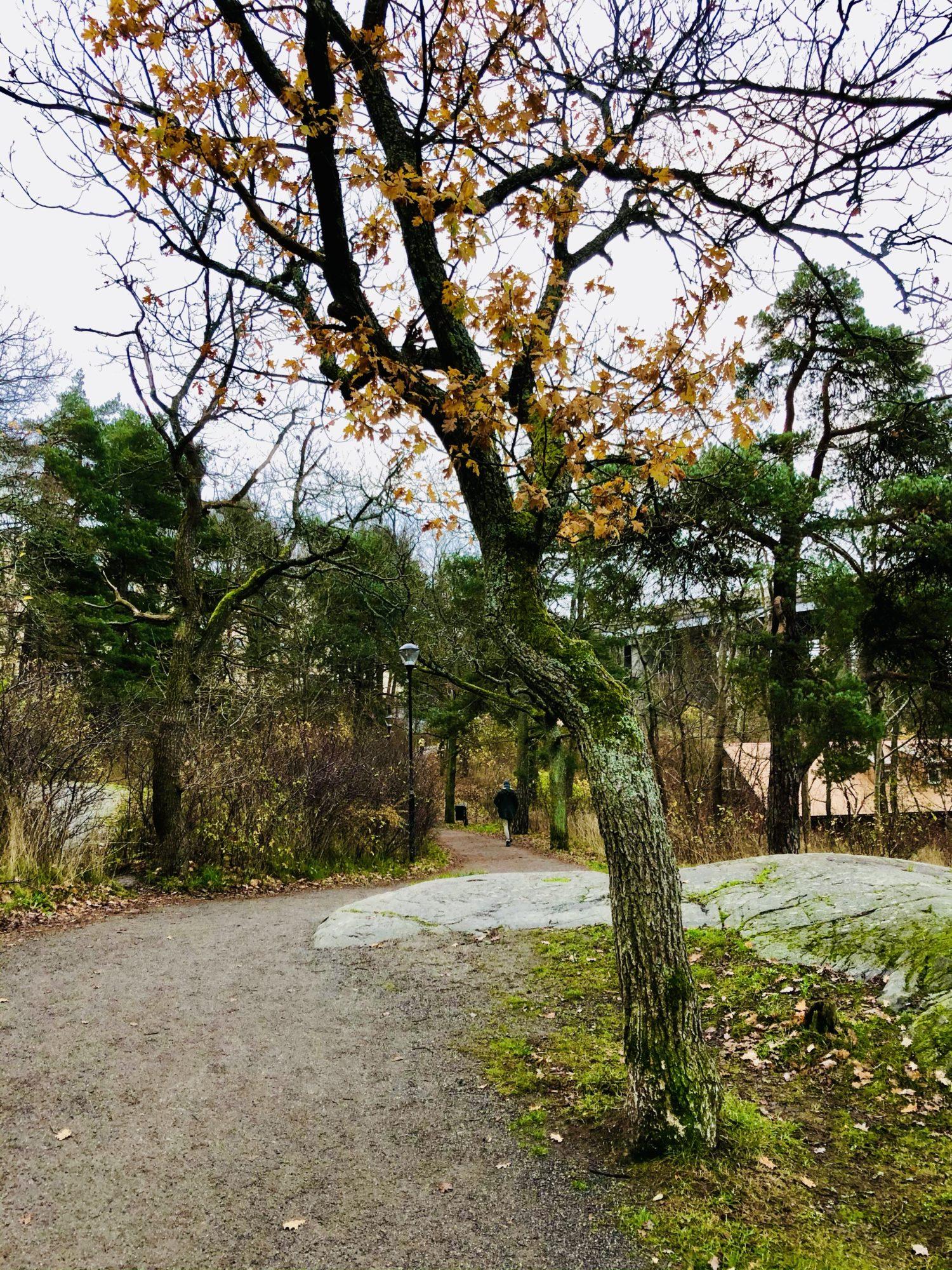 Kungsholmen Runt löpning