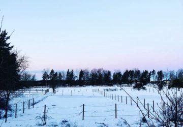 Veckans bästa: snö och kyla
