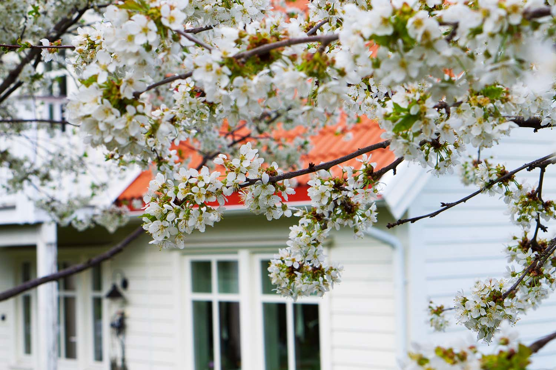 Trädgårdsnjutning i maj