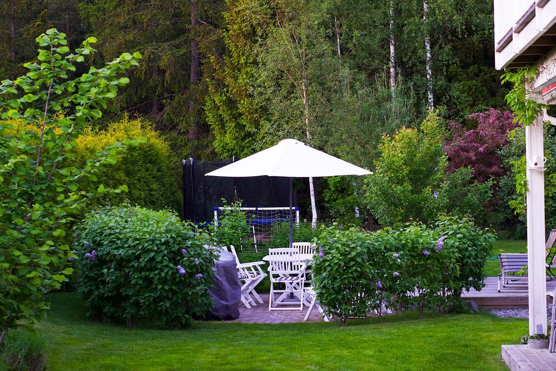 Trädgården i början av juni